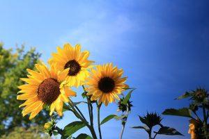 flower-1274045_640