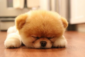 cute-dog-sleeping.jpg