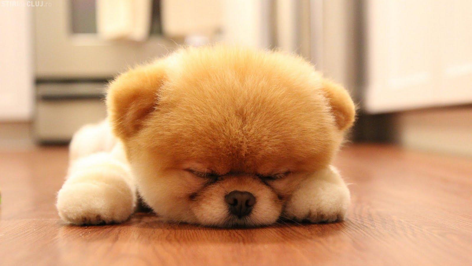 cute-dog-sleeping.jpg