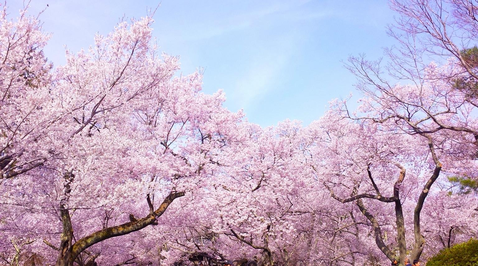 goukaku-suppli_2015-11-11_12-08-37.jpg